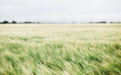 7 Healthy Foundations For Growing Churches – Part 2